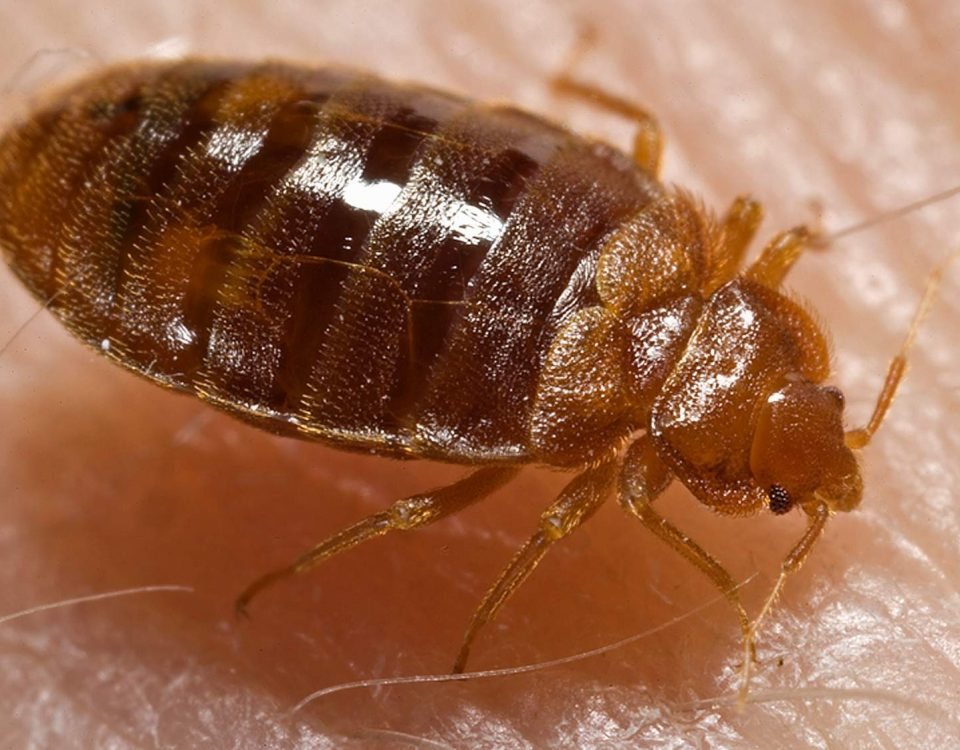 Bed Bug Cleaning Service