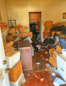 hoarding and bed bug cleaning