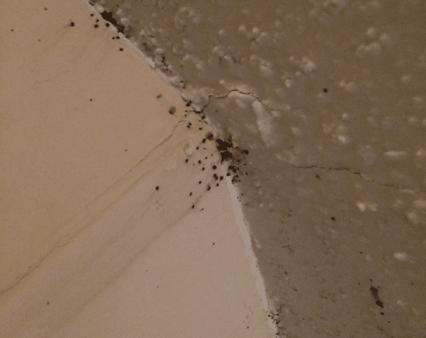 How To Clean Bed Bug Feces