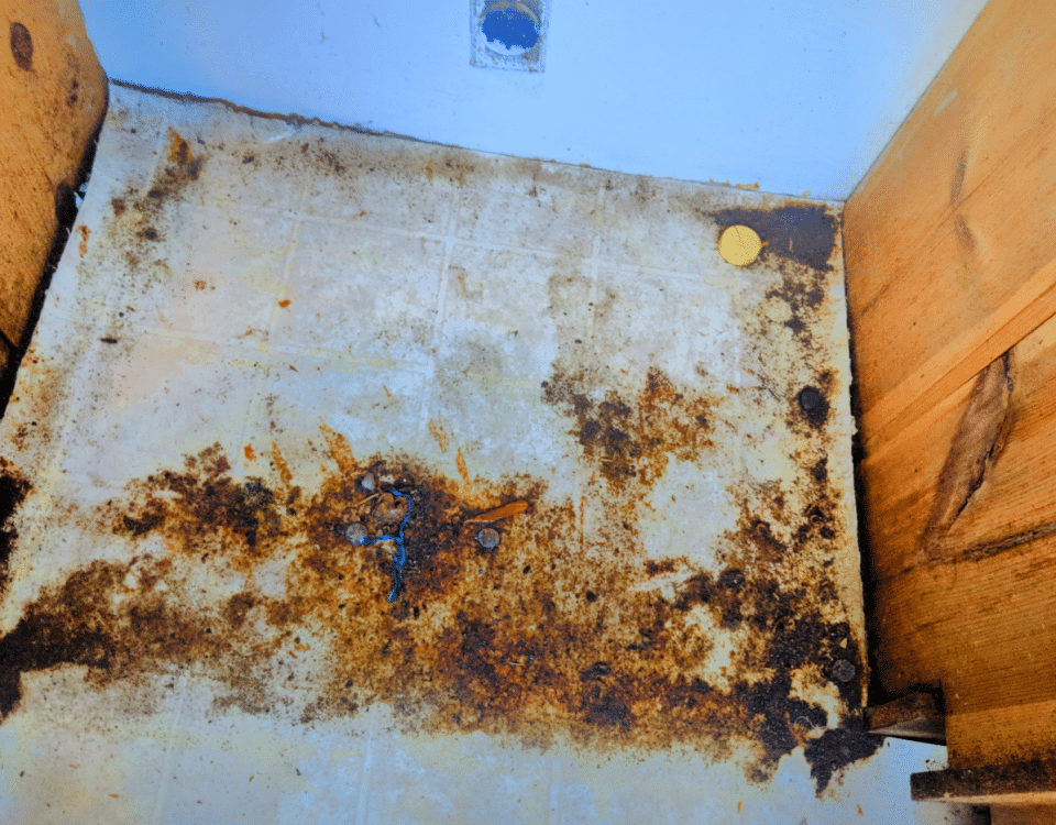 cockroach cleaning service floor